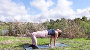 Yoga for the Spine, Flexibility, Hips and Shoulders